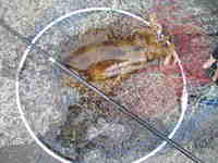 20060529